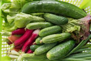 légumes perte de poids